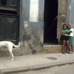 The Havana Dog