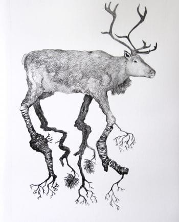 Reindeer and Birch