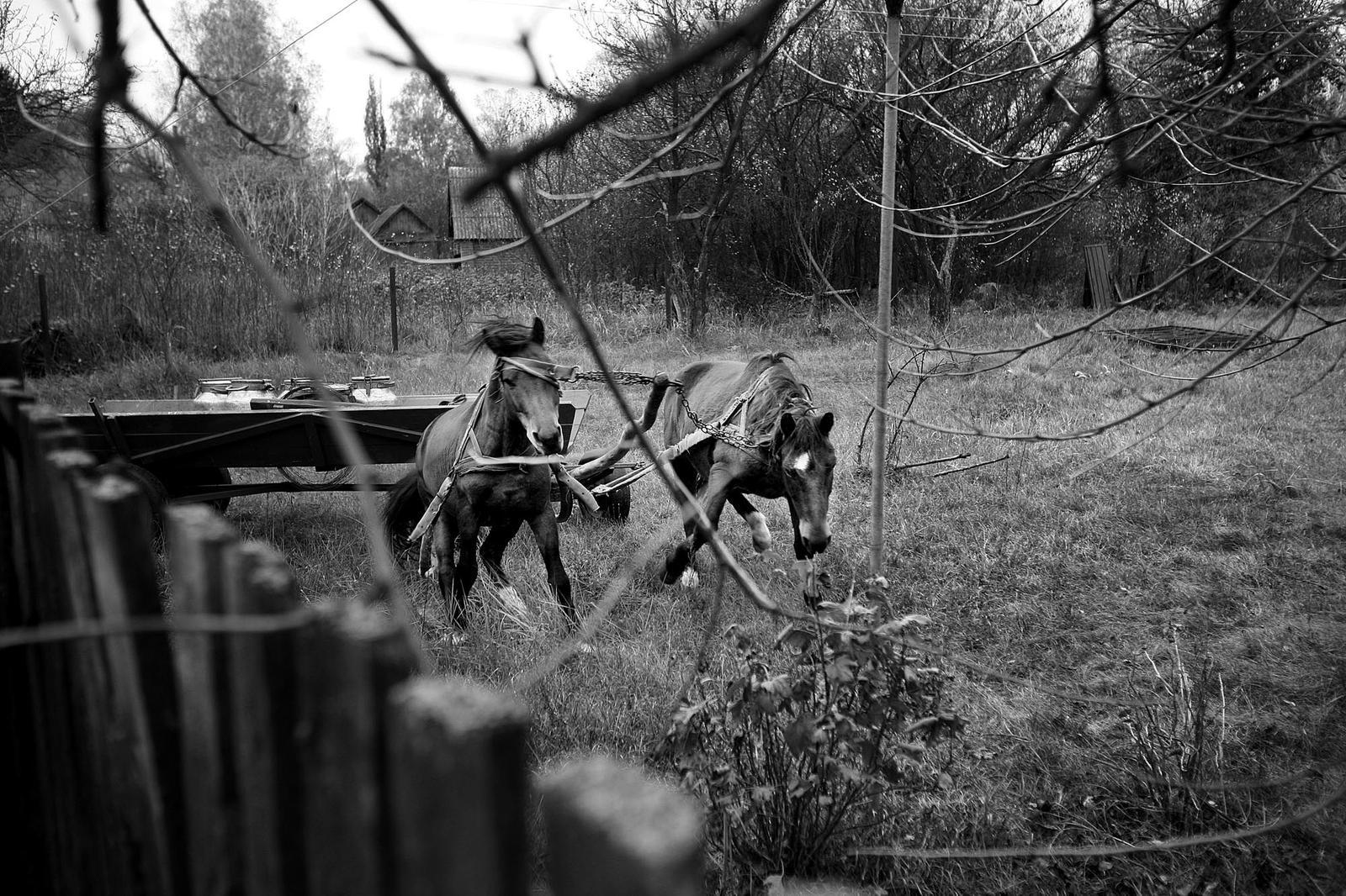 Tsjernobyl III
