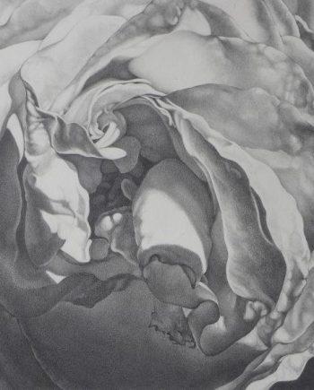 Foldings: Roses IV