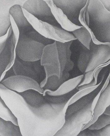 Foldings: Roses V