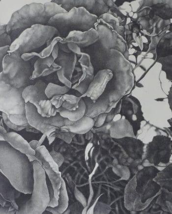 Foldings: Roses VII