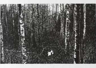 December (Birches)