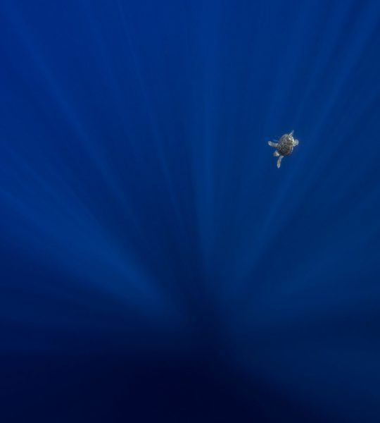 Floating II, Big Blue #I
